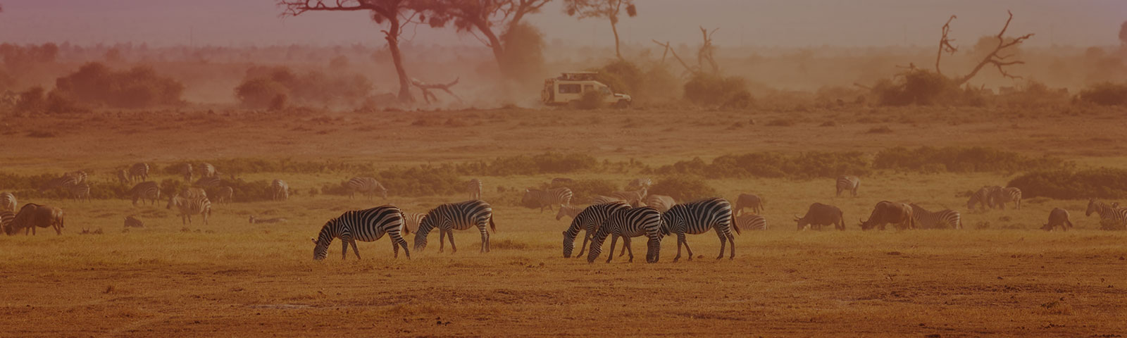 zebras grazing on a wildlife preserve